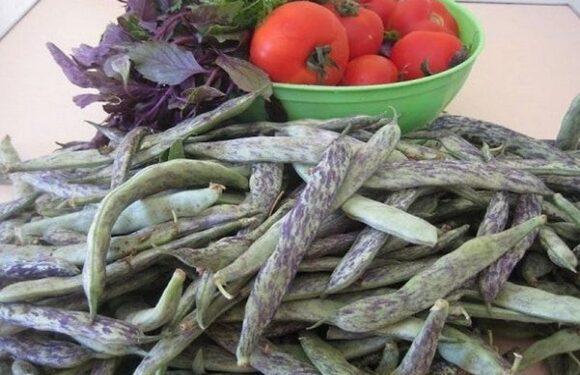 GRAH (Phaseolus vulgaris)