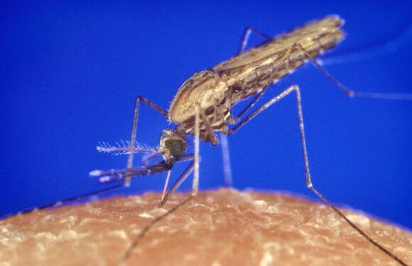 Zašto komarci neke ljude ujedaju redovno, a druge zaobilaze